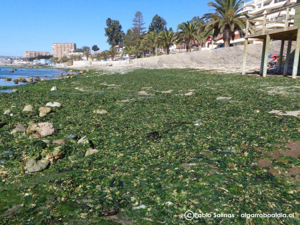 Playas en Algarrobo